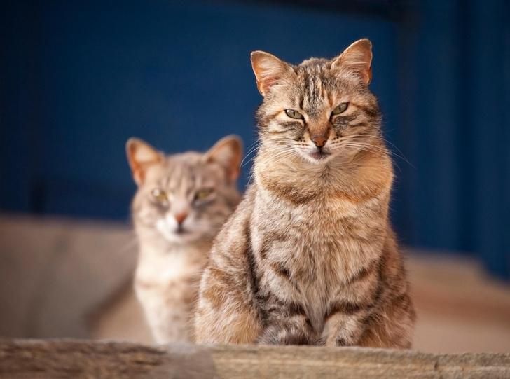 Фото №1 - Все домашние кошки имеют единого предка