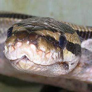Фото №1 - Беспризорную змею нашли в Германии