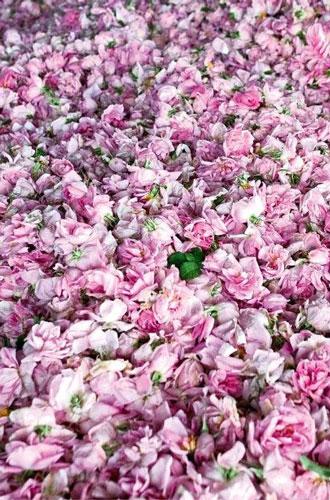 Фото №4 - Аромат дня: Promise от Editions de Parfums Frederic Malle