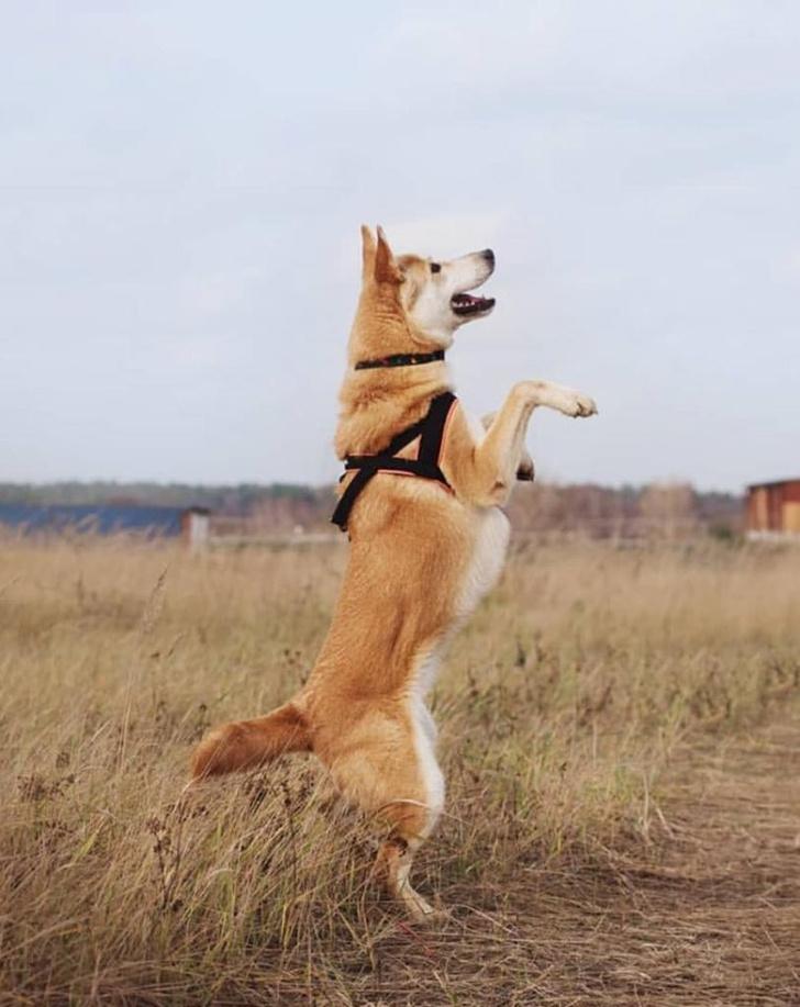 Фото №4 - Котопёс недели: собака Лаки и кошка Мила