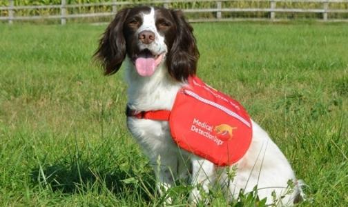 Фото №1 - В Британии собаки будут диагностировать у пациентов рак