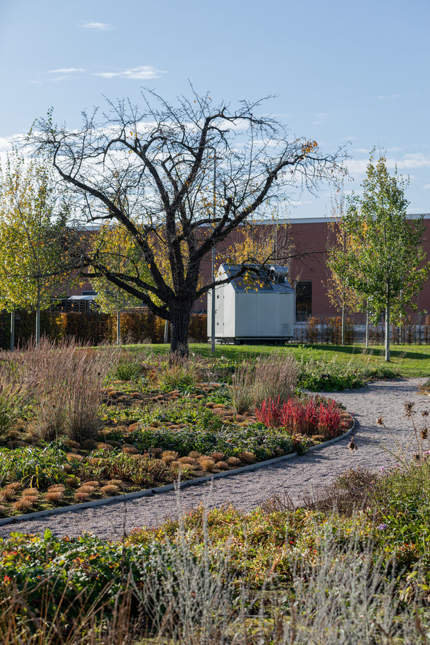 Фото №6 - Сад Пита Удольфа на кампусе Vitra