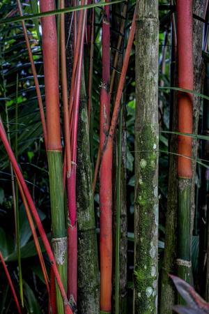 Фото №9 - Отель в джунглях Коста-Рики