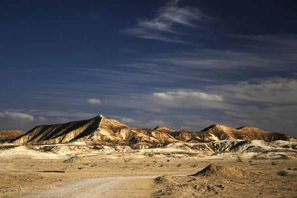 Фото №1 - По сторонам дороги в пустыне Негев