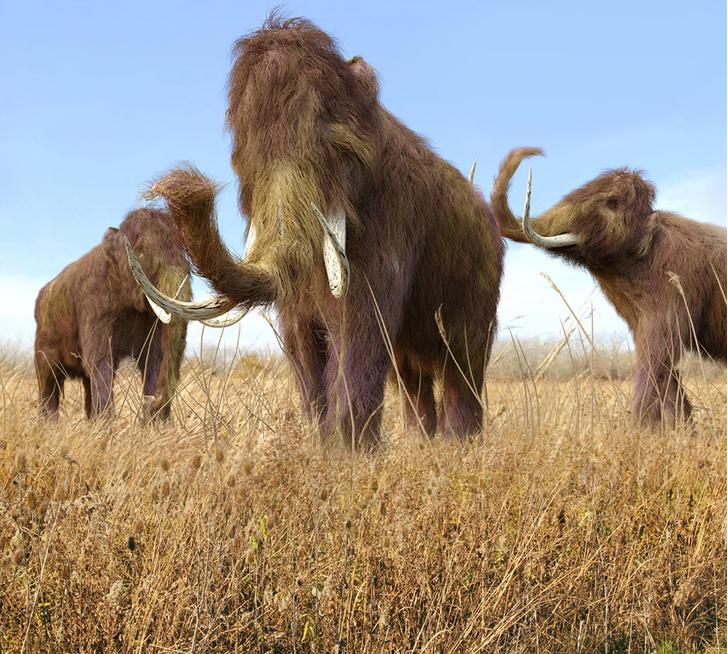 Фото №1 - В Арктике найдены останки мамонтов, позволяющие возродить вид