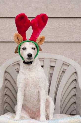 Фото №5 - Вырядился: забавные новогодние наряды домашних питомцев