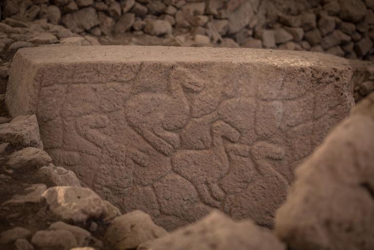 Фото №5 - Гёбекли-Тепе: 7 вопросов о древнейшем храмовом комплексе в мире