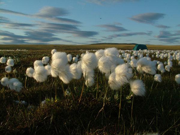 Фото №5 - Арктический брат Байкала
