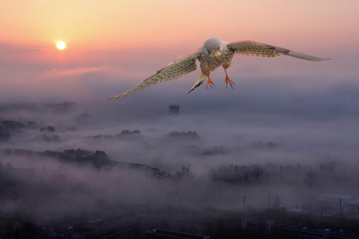 Фото №1 - Ради спасения мигрирующих птиц в Нью-Йорке погасят наружное освещение