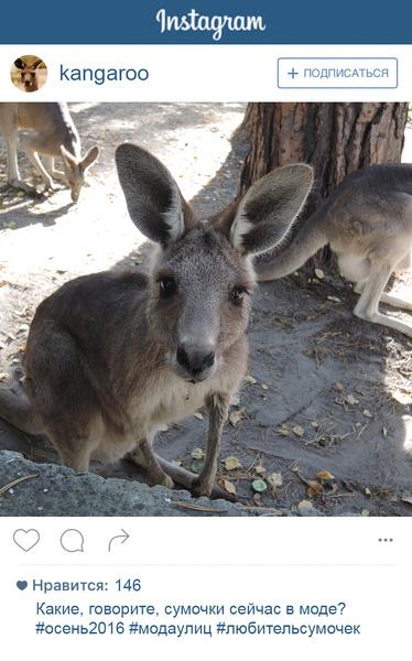 Фото №2 - Если бы у зверей был «Инстаграм»: 20 блогеров из зоопарка