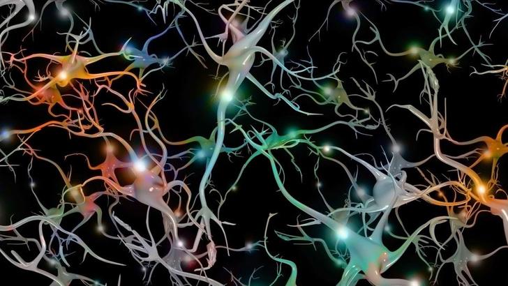 Фото №1 - Ученые из Франции создали синтетические клетки мозга, которые хранят воспоминания