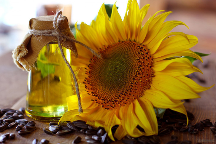 Фото №1 - Семена подсолнечника признаны токсичными