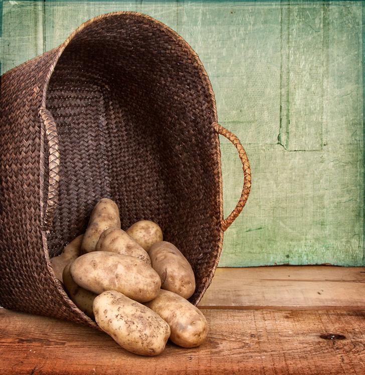 Фото №1 - Картофельный вопрос