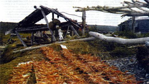 Фото №2 - Живущие у реки Пойтовоям