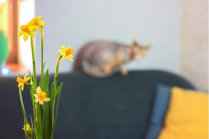 Фото №6 - 9 популярных цветов, которые смертельно опасны для котов