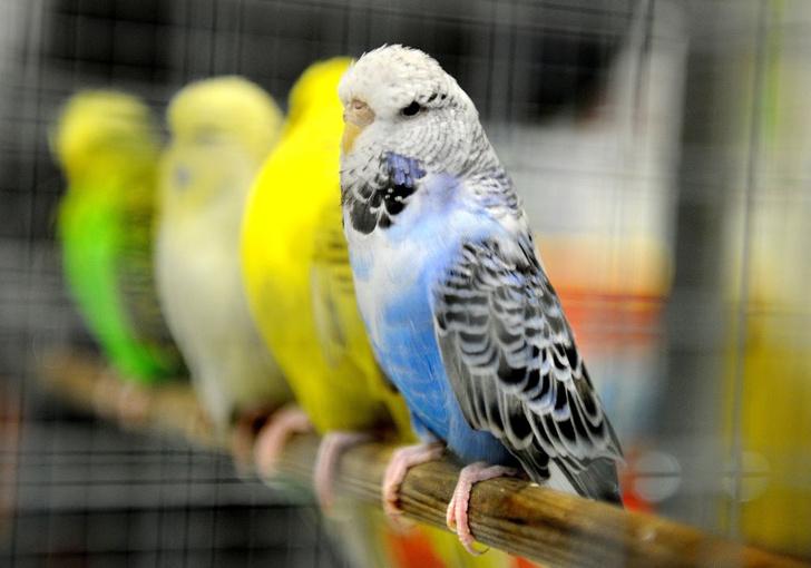 Фото №1 - Попугаи оказались способны принимать экономически выгодные решения