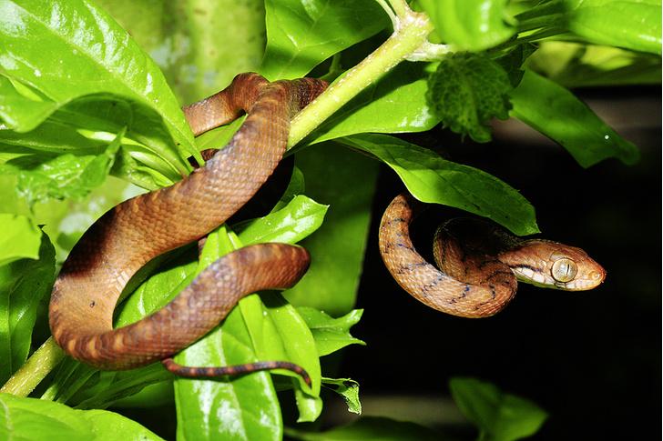 Фото №5 - Зоология: островитяне