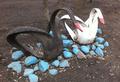 Резиновые лебеди из шин или нищета в головах