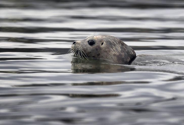 Фото №1 - Канадский поселок оккупировали тюлени
