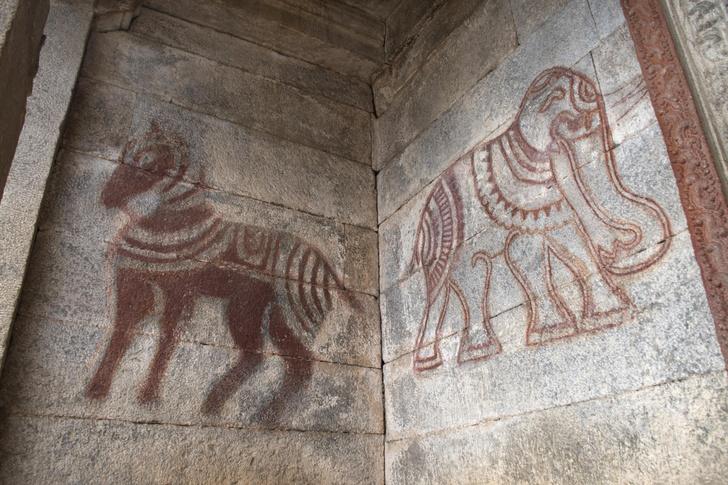 Фото №1 - Почему у слона все четыре колена вперед, а у лошади— два вперед и два назад?