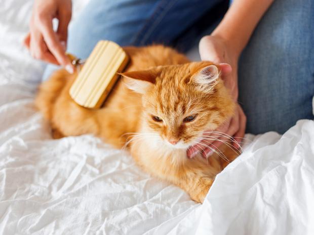 Фото №5 - Отдать нельзя оставить: что делать, если у вас аллергия на домашнее животное