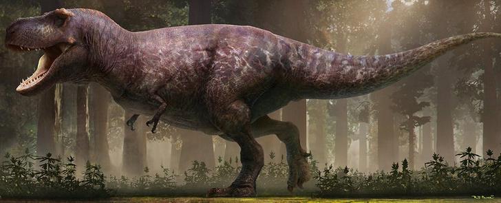 Фото №1 - Создана самая точная реконструкция тираннозавра