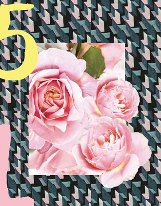 Фото №8 - Розы из сада д'Орнано: аромат Izia от Sisley