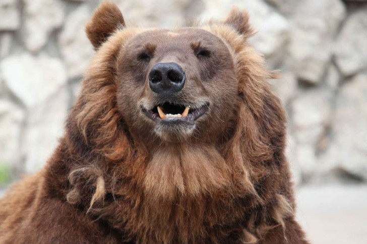 Фото №1 - В Московском зоопарке раньше срока заснули медведи
