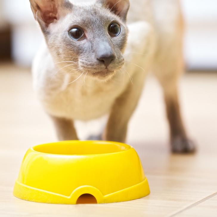 Фото №5 - Генетика: котенок от дизайнера
