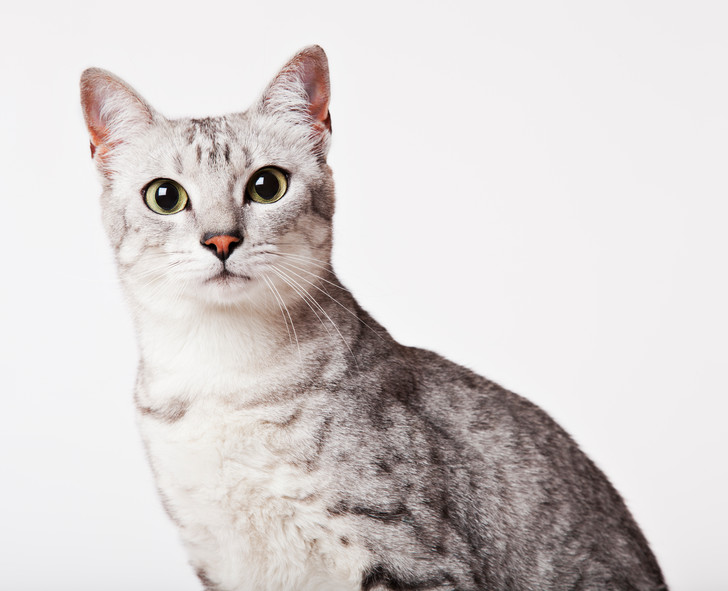 Фото №2 - Овну— мау, Раку— сфинкс: какая кошка подходит вам по знаку зодиака