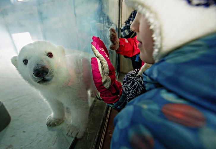 Фото №1 - Детки вне клетки: 12 лучших зоопарков мира