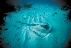 Фото №3 - Мушкетеры подводного царства