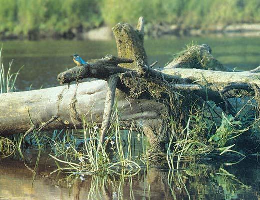 Фото №1 - Заколдованный лес