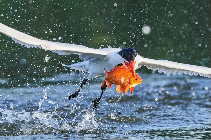Фото №1 - Ловись, рыбка