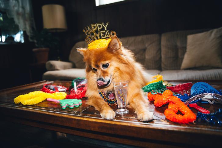 Фото №15 - Как мы все будем встречать Новый год 2021: показывают собачки