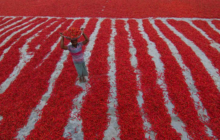 Фото №1 - Ковер из перцев чили