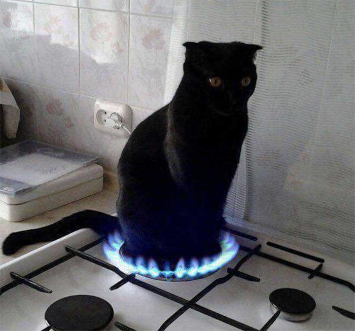 Фото №9 - 20 мемных котов, похожих на известных режиссеров