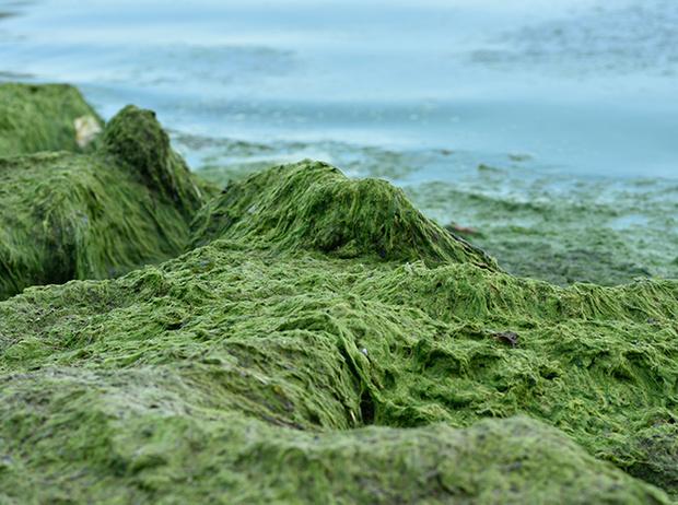 Фото №2 - Самые древние растения планеты