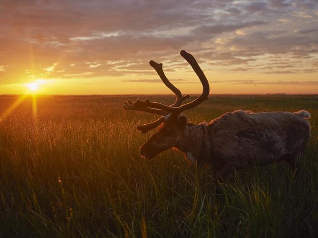 Фото №1 - Экспедиция по Енисею: открой для себя Сибирь