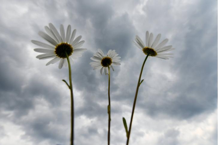 Фото №1 - Биологи выяснили, могут ли растения мыслить и испытывать эмоции