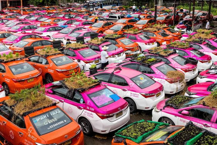 Фото №1 - И такси, и огород