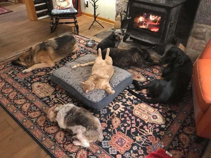 Фото №1 - 40 фотографий котов, отобравших ложе у собак