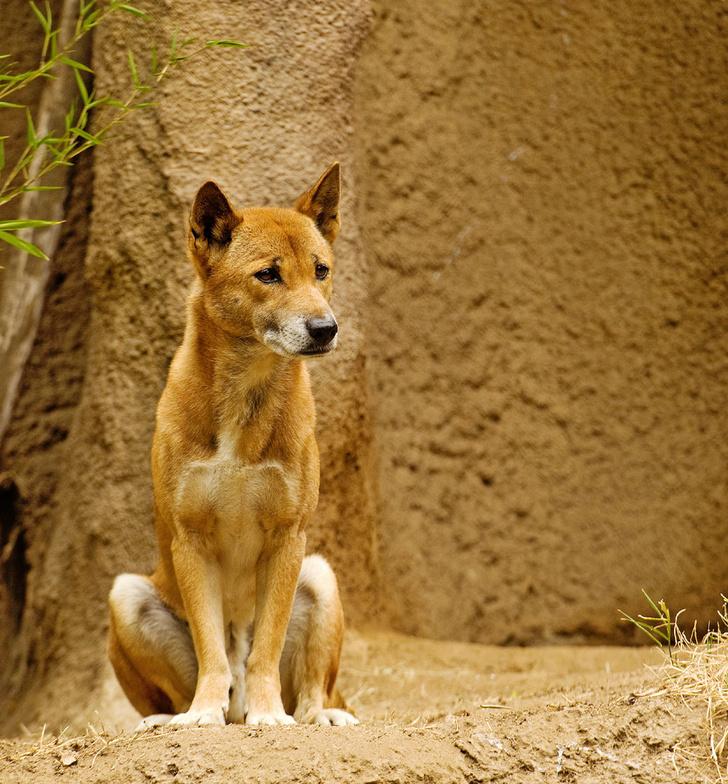 Фото №7 - Собаки с волчьим билетом