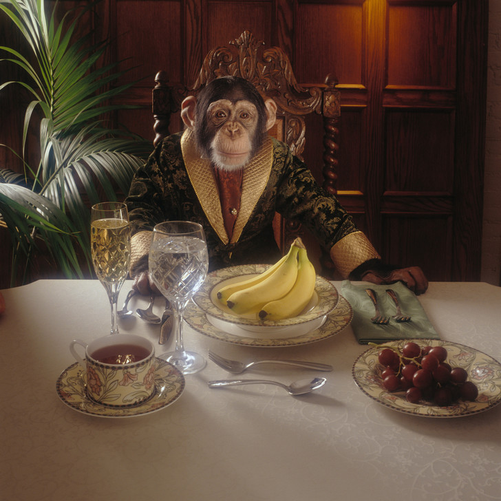 Фото №1 - Обезьяну в человека превратила диета