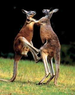 Фото №2 - Австралийские пустынники