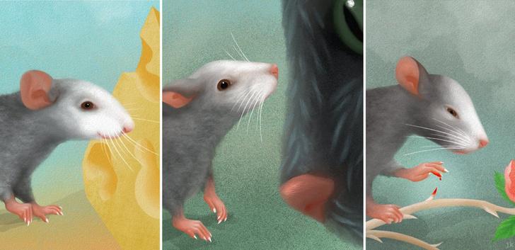 Фото №1 - Ученые описали мимику мышей