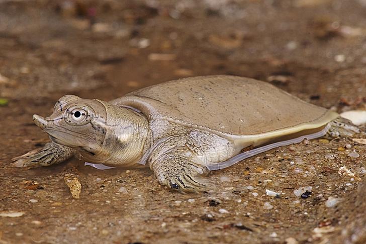 Фото №2 - Спортивные черепахи, прозрачные мухи и другие новые открытия