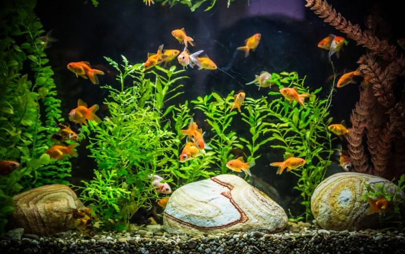 мутная вода в аквариуме что делать видео Www Wday Ru