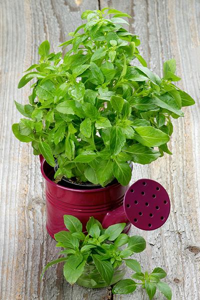 Фото №6 - Зарядись! 10 растений, которые улучшают самочувствие