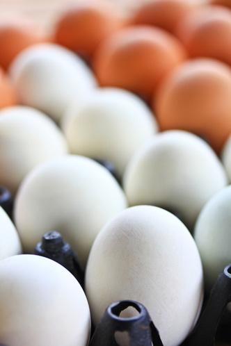 Фото №1 - Почему одни куриные яйца белые, а другие коричневые?